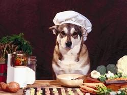 chien chef cuisine